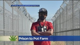 Download Bob Marley's Son Turning Empty Central California Prison Into Pot Farm Video