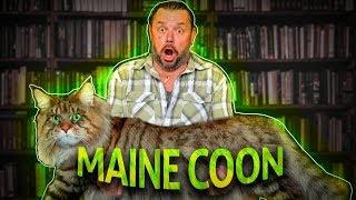 Download MAINE COON, O GATO GIGANTE AMERICANO! | RICHARD RASMUSSEN Video