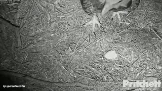 Download SWFL Eagles - E9 Is Gone. The Egg Will Always Stay With Us, Mom! 5.22.17. Video