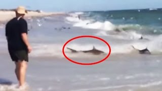 Download Rare Shark Feeding Frenzy in North Carolina Video