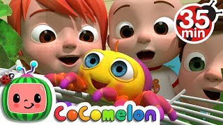 Download Itsy Bitsy Spider | +More Nursery Rhymes & Kids Songs - CoCoMelon Video