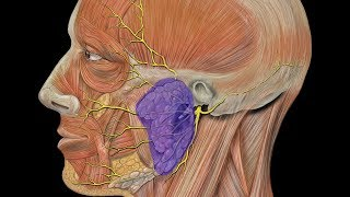 Download 4 Ways to Treat Salivary Gland Swelling at Home Video
