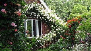Download 権田邸[秘密の花園]バラ園 Video