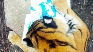 Download Art Class With The Big Cats Video
