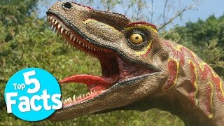 Download Top 5 Disgusting Dinosaur Facts Video