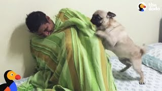 Download Pug Dog FREAKS OUT After Reunited With Hiding Uncle | The Dodo Video