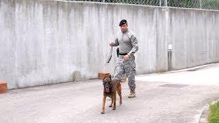 Download Trening pasa MUP-a KS: dresura za visokorizična hapšenja i traženje narkotika Video