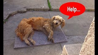Download Hope For Paws: Stray dog walks into a yard and then collapses... Video
