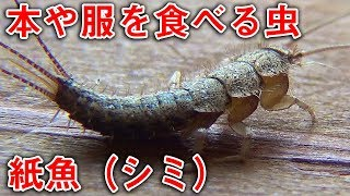 Download 服や本を食べる虫 | Insects that eat the clothes and books Video