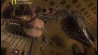 Download Загадки Юрского Периода Раны Тиранозавров Video