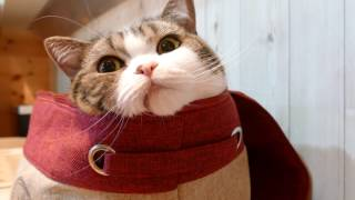 Download いろいろ入るねこ。-Maru gets into various things.- Video