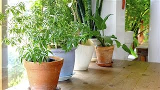 Download The Health Benefits of Houseplants Video