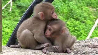 Download 【SNOW MONKEY】 ニホンザル / 地獄谷野猿公苑 ☆Cute Baby Monkey☆ 1 year documentary vol.1 Video
