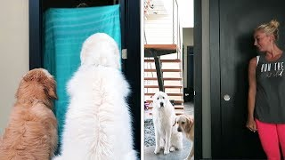Download WHAT THE FLUFF CHALLENGE (Super Cooper Sunday #153) Video