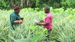 Download Togo, Développement du secteur agricole Video