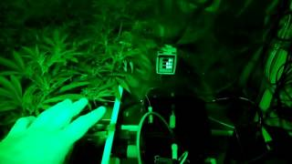 Download Ep6, pt2 Dwc Current Culture H2O Water Change Video