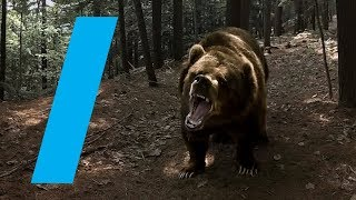 Download Wild With: Bears (360 Video) Video