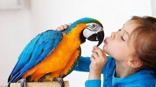 Download Best Birds for a Beginner   Pet Bird Video