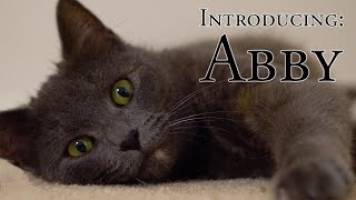 Download Introducing: Abby Video