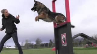 Download Obedience IPO Trained Versatility German Shepherd Video