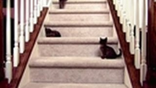 Download Baby Kittens Face Staircase   Too Cute Video