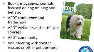 Download How To Become A Professional Dog Trainer Video