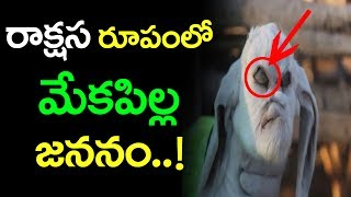 Download రాక్షస రూపంలో మేక జననం | Baby goat is born with Evil like features Viral in Argentina | Latest News Video