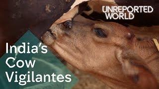 Download India's Hindu vigilantes killing to protect cows | Unreported World Video