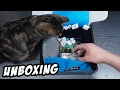 Download Koci Unboxing PIXEL-BOX - VERSUS Luty 2017 Video
