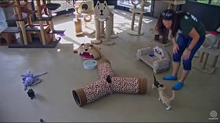 Download Afton's quick visit with the kittens Video