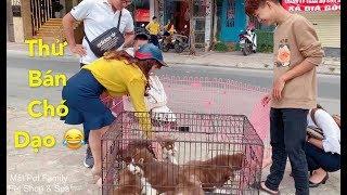 Download Thánh Cò bán chó dạo mới xuất hiện - cười náo loạn cả khu phố vì quá duyên - Mật Pet Family Video