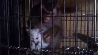 Download Shaki Kidnapping My Kitten Shakido Video
