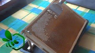 Download Pasieka Początkującego Pszczelarza - #10 Kręcenie miodu czyli wirowanie :) Video