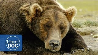 Download The Land of Giant Bears | Full Documentary - Planet Doc Full Documentaries Video
