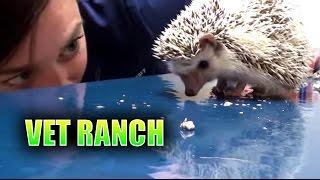 Download Hedgie the Abandoned Hedgehog Video