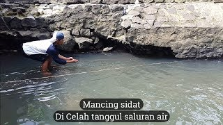 Download Sensasi Menegangkan di Bendungan Sungai (Mancing Sidat) Video