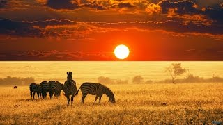 Download The Beauty of Africa | landscapes and wildlife Video