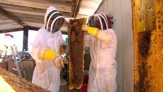 Download Risk Takers - 112 - Killer Bee Removal Expert | FULL LENGTH | MagellanTV Video