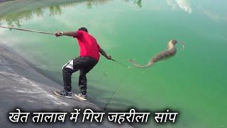 Download खेत तालाब में गिरा जहरीला सांप | Rescue Russell's viper snake from Ahmednagar, maharashtra Video