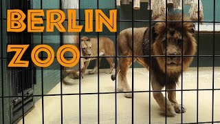 Download Berlin Zoo as seen by a Tourist (2015) Video