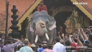 Download Thirunakkara Pakal Pooram 2018 - Kerala Elephants Video