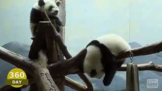 Download The First Year of Mei Lun and Mei Huan Video