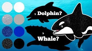 Download Sea Animals for Kids, Sea animals Learn Name and Sounds Killer Whale, Sperm Whale, Humpback Whale Video