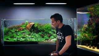 Download LEARN MORE ABOUT THIS STUNNING 450L PLANTED AQUARIUM BY GREEN AQUA Video