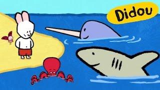 Download Didou dessine-moi un Requin, un Narval et une Pieuvre | Dessins animés pour les enfants Video