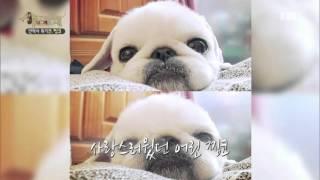 Download 세상에 나쁜 개는 없다 - 안락사 위기견 찡코 #001 Video