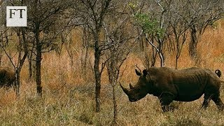 Download Big Game, Big Money: Inside the illegal wildlife trade Video