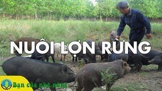 Download Trở Thành Tỷ Phú Từ Mô Hình Nuôi LỢN RỪNG Lấy Thịt Video