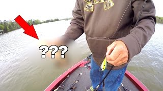 Download He Caught a RARE Fish!!!! Video