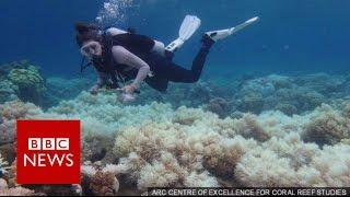 Download Great Barrier Reef: 2/3 damaged in 'unprecedented' bleaching - BBC News Video